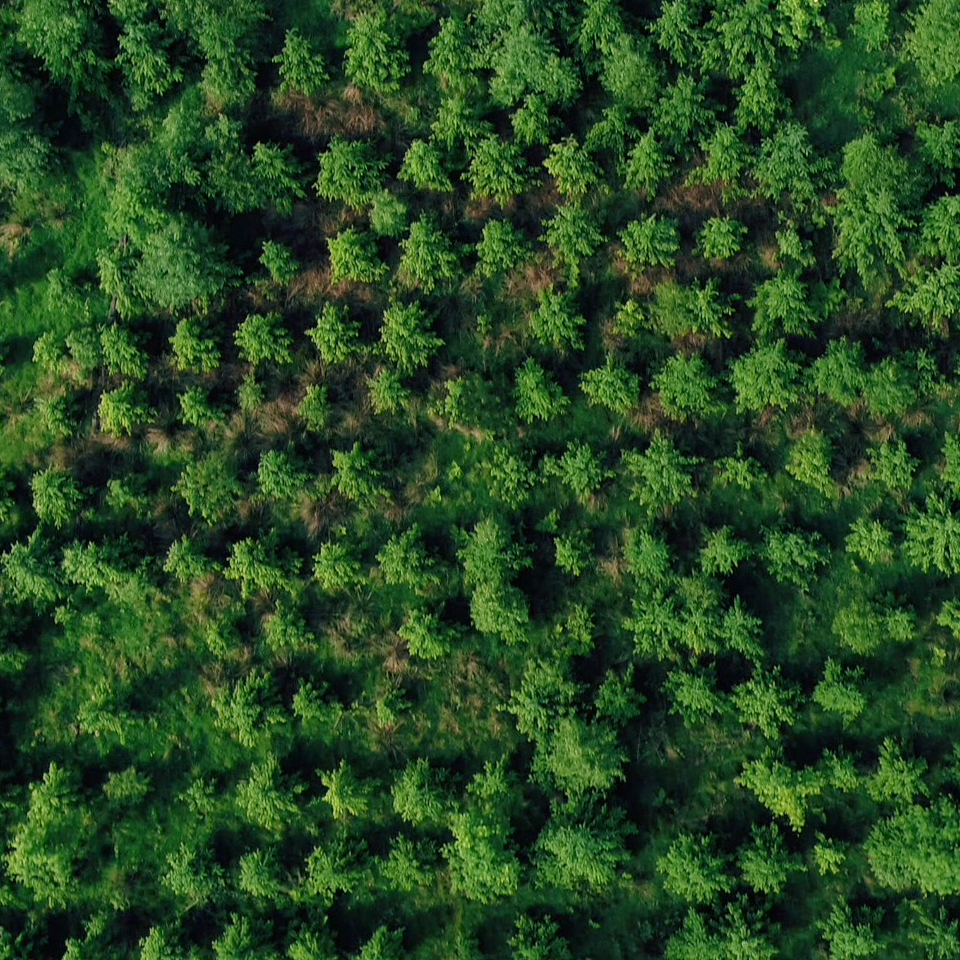 Aerial photograph of a forest taken using a video camera drone